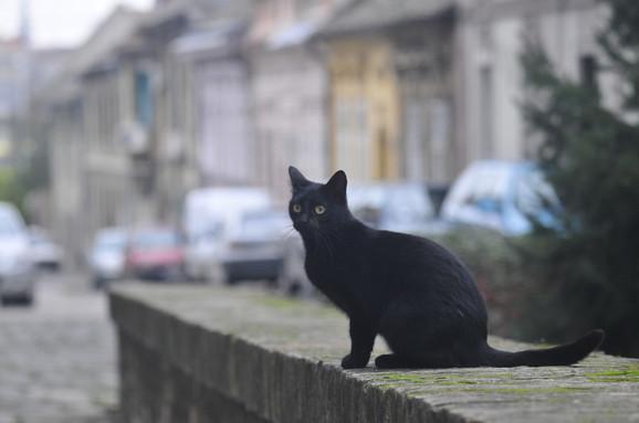 Iz godine u godinu sve je više mačaka na ulici