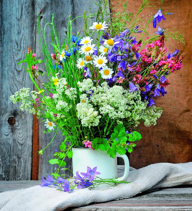 Umesto trave zasejte livadsko cveće