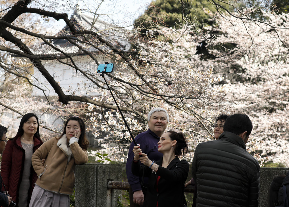 epa06623189 - JAPAN CHERRY BLOSSOMS (Cherry blossoms bloom in Tokyo)