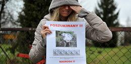 Zostawiła domową świnię rolnikowi. Zwierzę zaginęło!