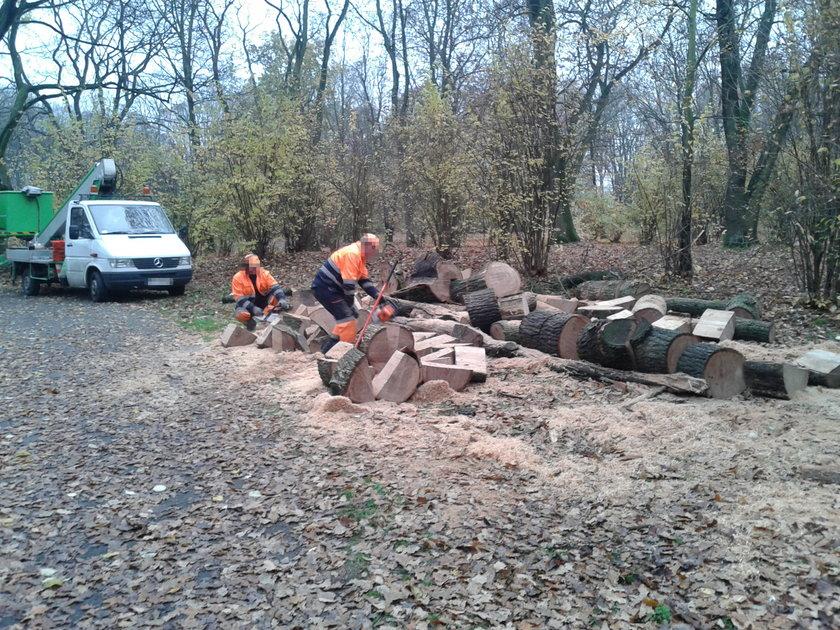 wyrąb drzew w parku