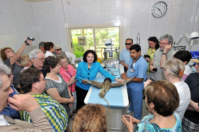 Bolnica za sokolove
