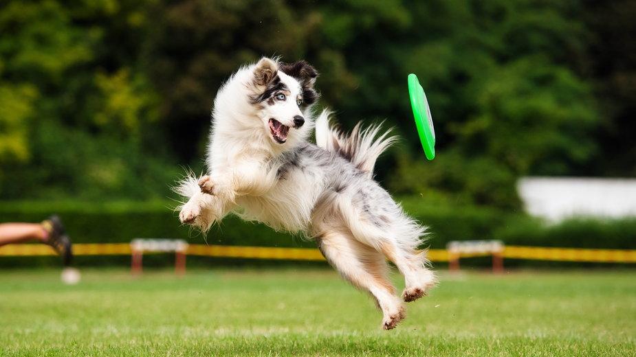 Nauka psa wykonywania poleceń wymaga cierpliwości - ksuksa/stock.adobe.com