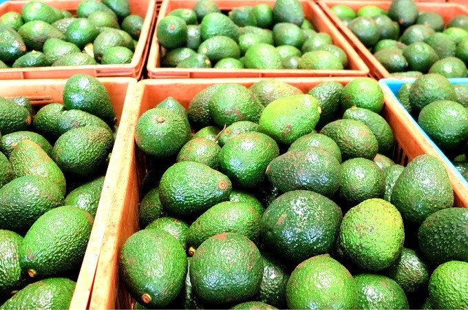 Avocado exports from kenya