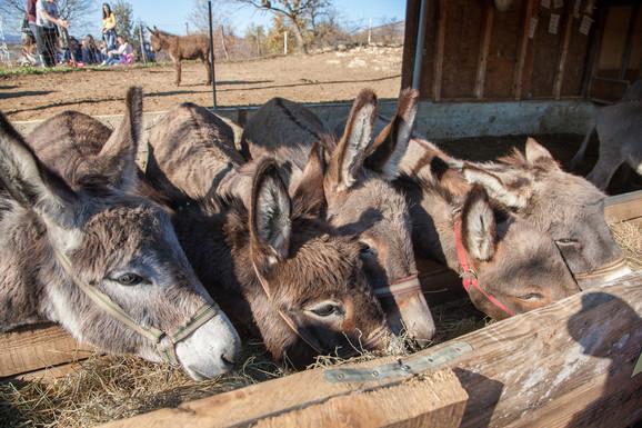 Za razliku od čoveka magarac na dobro uzvraća - dobrim