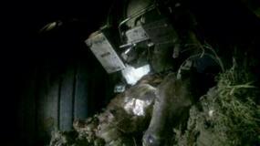 Piloci zabili krowę - pasażerowie w szoku