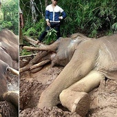 KO JE OVDE ŽIVOTINJA? Gazda nije hranio slona mesec dana i desilo se ONO NAJGORE (FOTO)