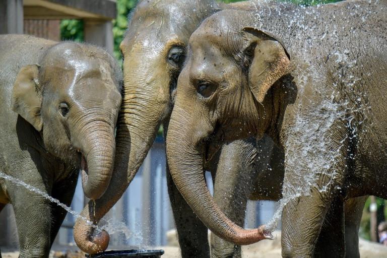 elephants keeping cool