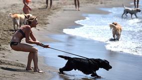 Miłośnicy zwierząt walczą o wstęp psów na plaże we Włoszech