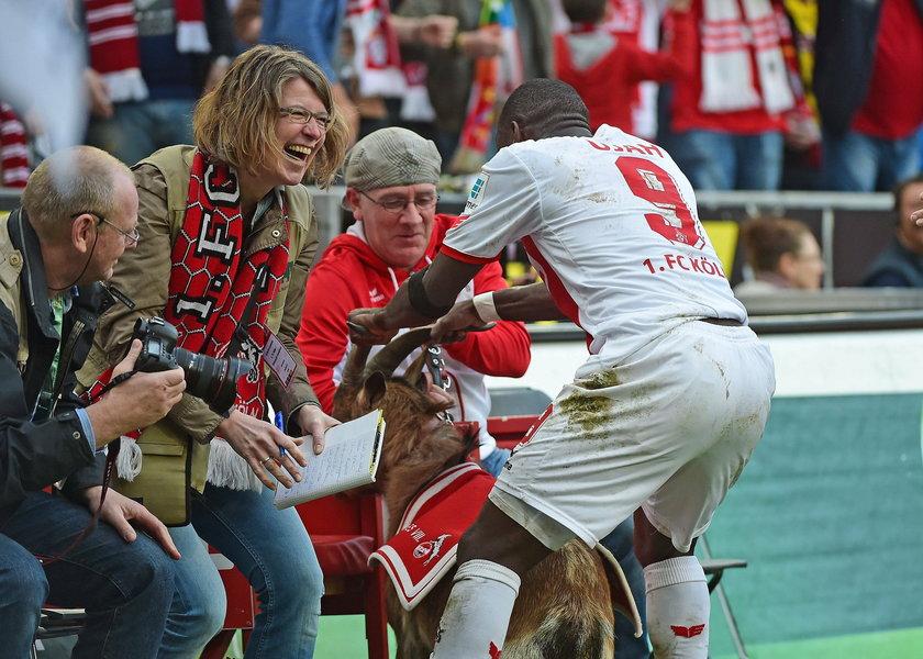 Anthony Ujah świętował bramkę z kozą! Obrońcy zwierząt wściekli!