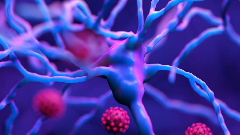 Koronawirus, Covid-19, komórki nerwowe, neurony