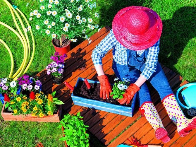 Cvet umesto leka za smirenje: Ova terapija je lepa, mirisna i bolja od sredstva za smirenje