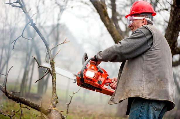 W Polsce nie wolno wycinać drzew samowolnie, nawet tych własnych. Kwestię tę reguluje ustawa o ochronie przyrody.