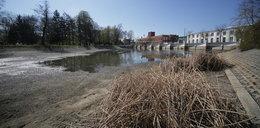 Susza. W Łodzi woda uciekła ze stawu w Parku Reymonta