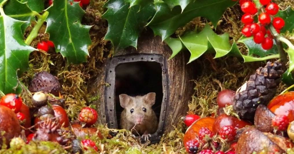 Typ findet Mäuse-Familie im Garten – und baut ihnen ein Dorf