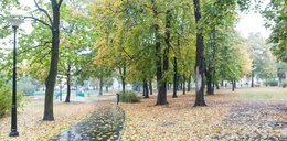 Zasadzą drzewa warte ponad 30 tys. złotych