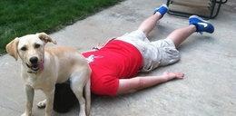 Psy to straszne dranie. Oto dowody!