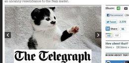 Nikt nie chce kotki. Wygląda jak Hitler!