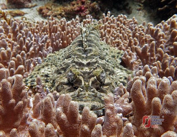 Ribe koje podsećaju na krokodile