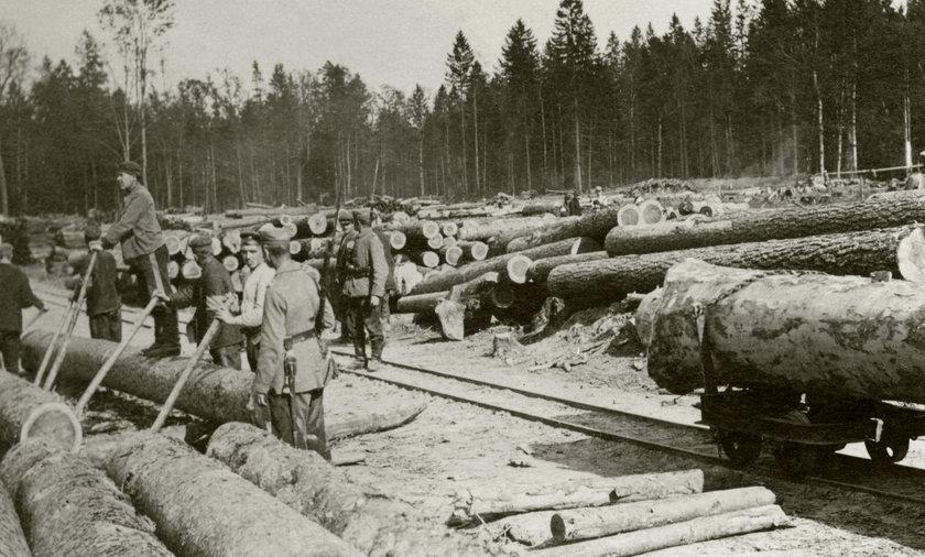 Nie mieli litości dla drzew. Wycinali na rozkaz carycy