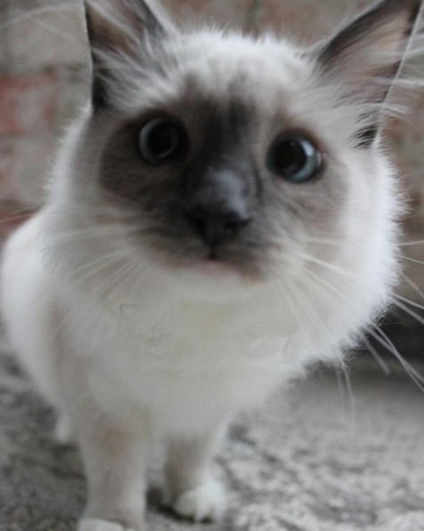 Kot Natalii Siwiec