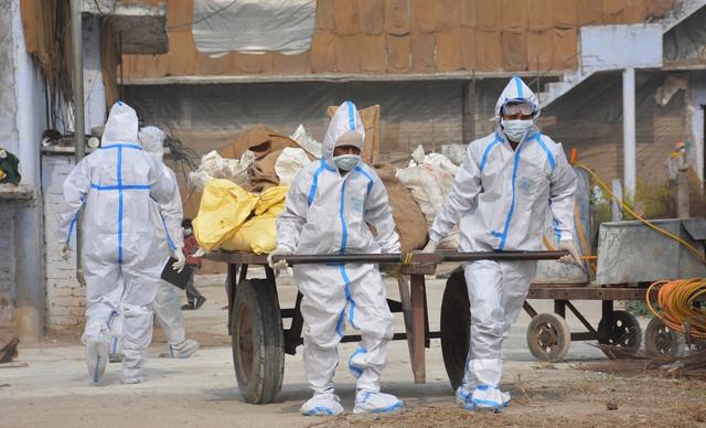 Epidemija ptičjeg gripa u Pundžabu