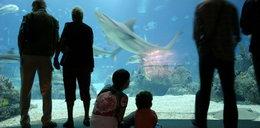 Chcą zbudować w Rzeszowie oceanarium