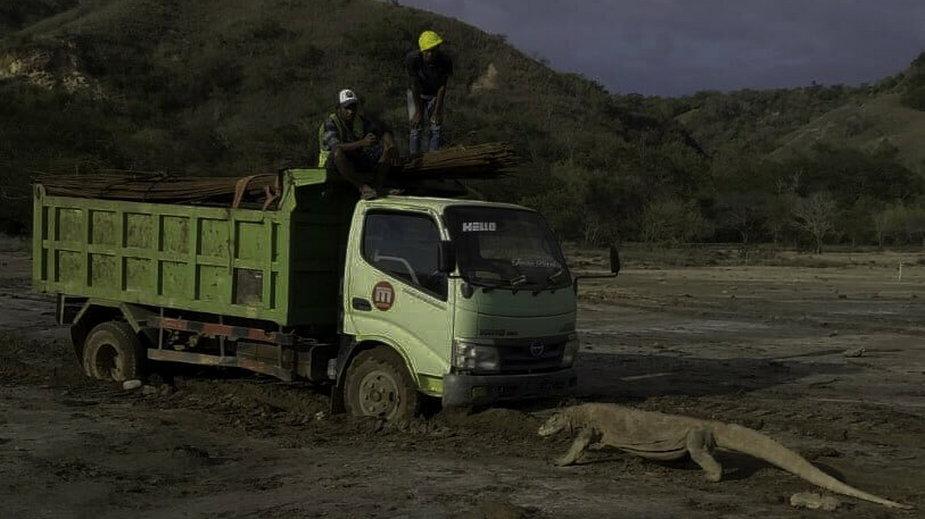 Zdjęcie warana z Komodo na placu budowy wywołało kontrowersje