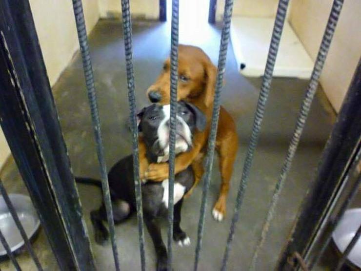 644414_psi-koji-se-grle-facebook-angels-among-us-pet-rescue