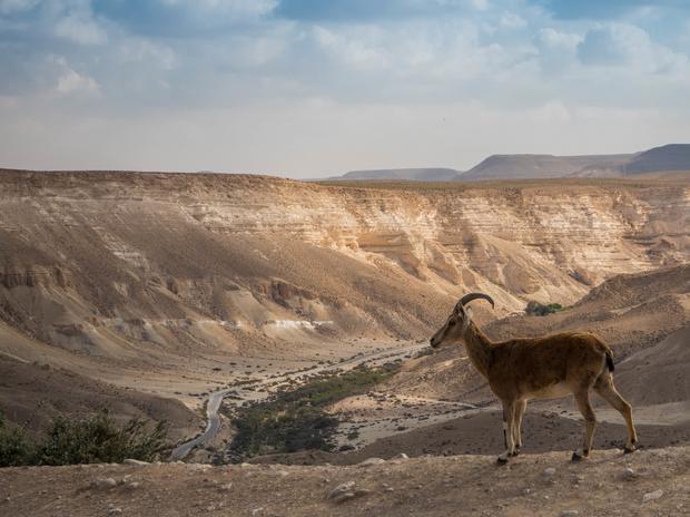 Park Narodowy Ein Avdat