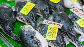 Władze japońskiego miasta ostrzegają przed jedzeniem ryby fugu