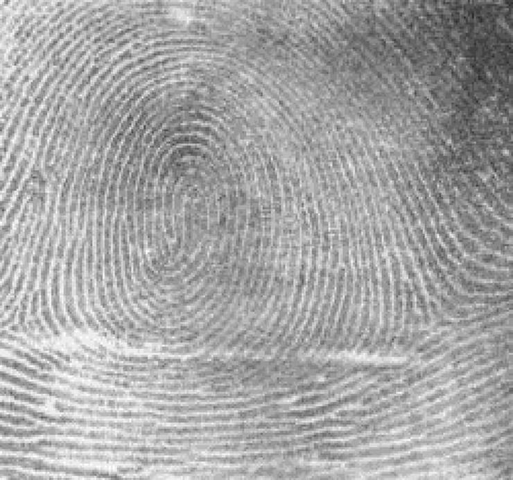 461758_fingerprintwhorl