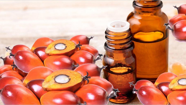 Palm Kernel Oil: The health benefits of this organic product are