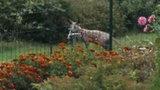 Dziwaczne zwierzę grasuje po Lublinie