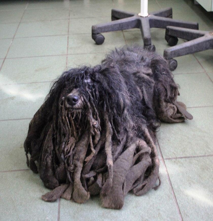 Koszmarnie zaniedbany pies