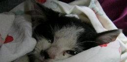 Częstochowa: Zwyrodnialec obdarł tego kotka ze skóry