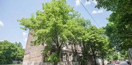 Miejsca w Poznaniu, gdzie zostaniesz pobity