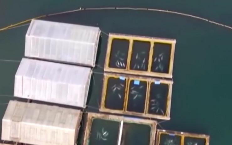 zatvor za kitove