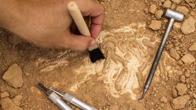 Ślady Celtów i Germanów odkryto w Pełczyskach