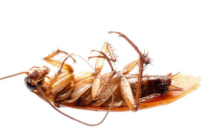 Insekti će padati kao snoplje