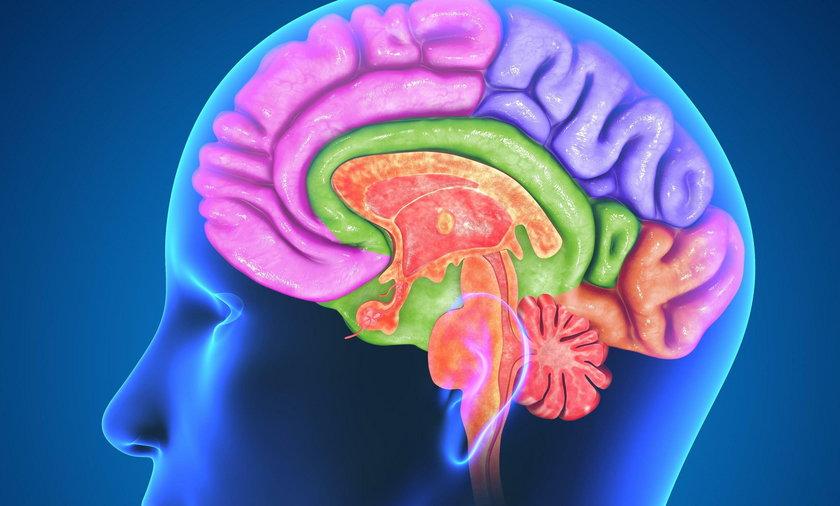 Jak rozruszać mózg?