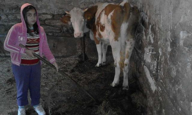 ... Miljana prvo nahrani stoku, pa spremi doručak