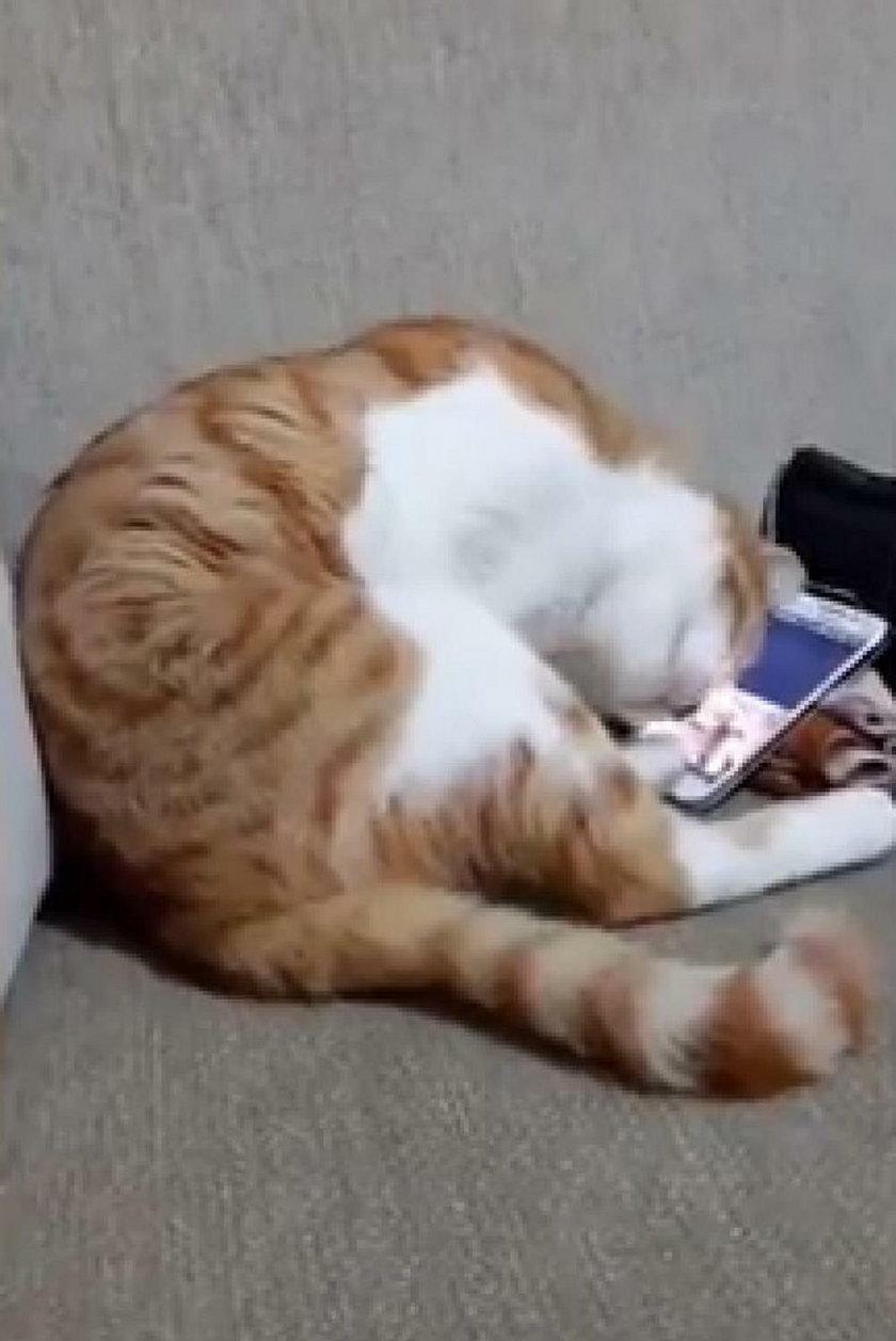 Reakcja kota na filmik ze zmarłym właścicielem. To doprowadzi Cię do łez...