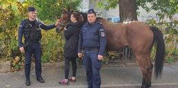 Spłoszony koń w centrum Lublina. Interweniowali policjanci