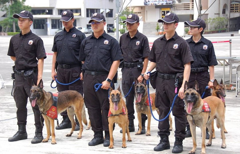 Psy policyjne