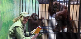 Eksperyment w polskim zoo. Czytają małpom, żeby...