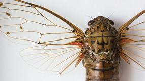 Cicada 3301: sekretny zakon planuje rewolucję na świecie?