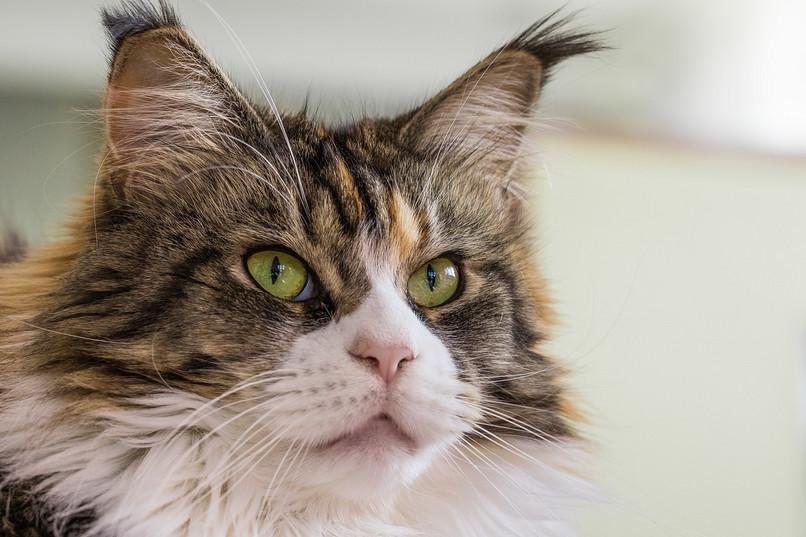 Najdrahšie Mačky Sveta
