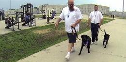 Więźniowie tresują psy dla niewidomych