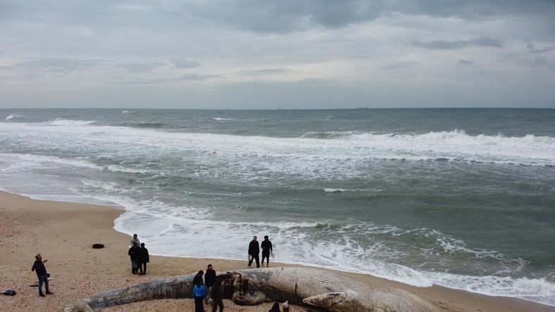 Katastrofa ekologiczna w Izraelu